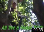 Video of Tees Valley Tree Surgery