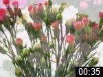Video of FLOWER STAND