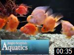 Video of Anglo Scottish Aquatics Ltd