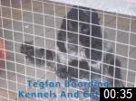 Video of TEGFAN BOARDING KENNELS & CATTERY