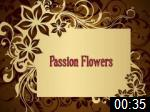 Video of Passion Flowers