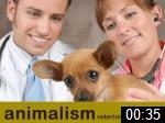 Video of Animalism Veterinary Surgeons